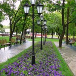 В Воронеже создадут более 200 цветников
