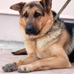 Собаководам: где выгуливать собак в Воронеже